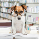 is dog boarding in my home legal?