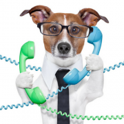 pet sitting office manager