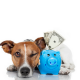 pet sitters who addressed cost
