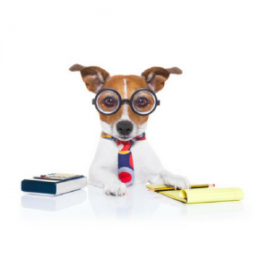 pet sitting business coaches review