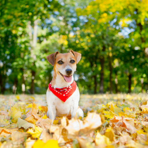 september pet sitting blog ideas