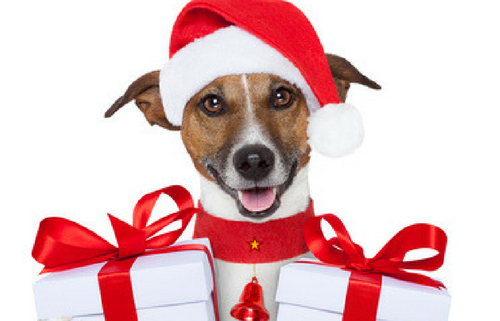 december pet sitting ideas