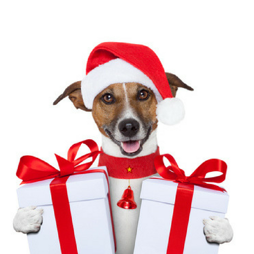 december pet sitting blog ideas
