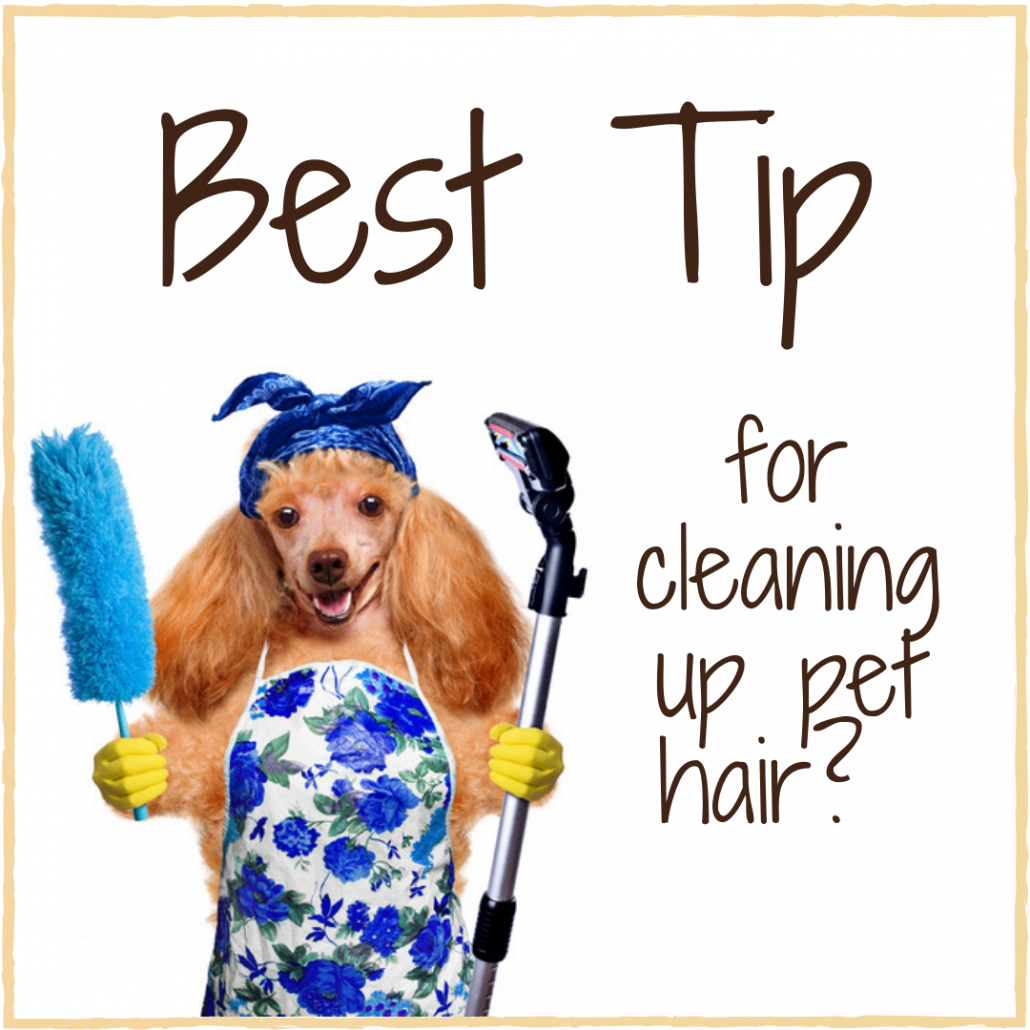 pet hair tip