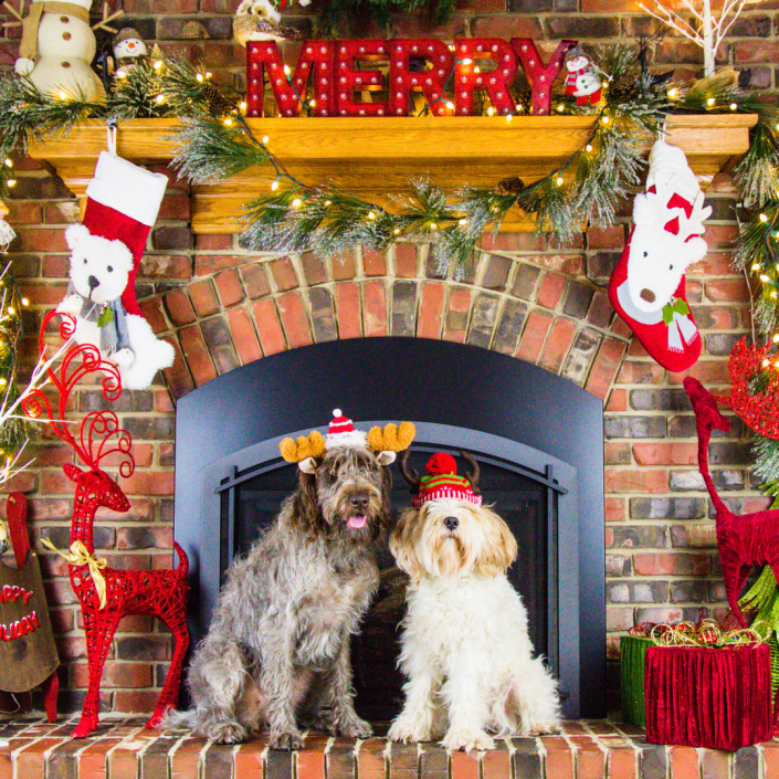 Holiday Pet Events